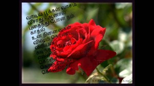 Red rose image & sad quote