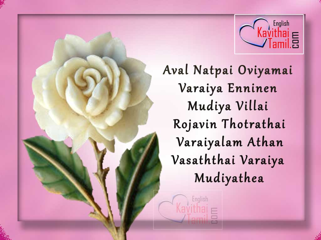 Latest kavithaigal white rose hd image for 2016