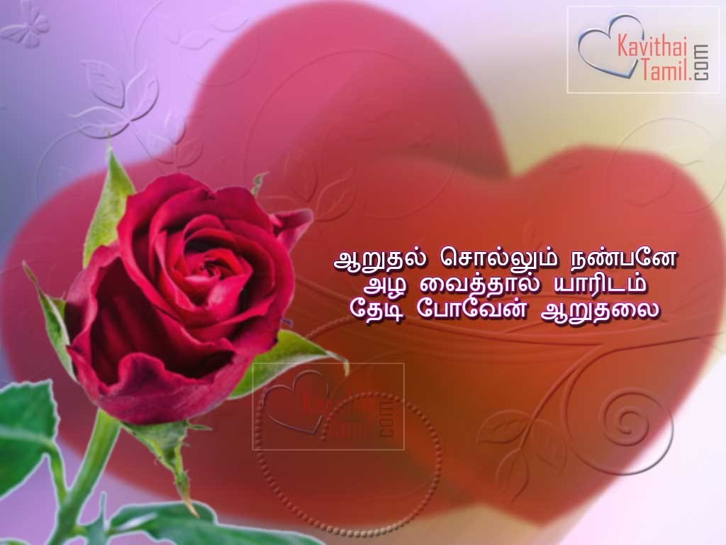 Red Rose with a sad feel tamil image